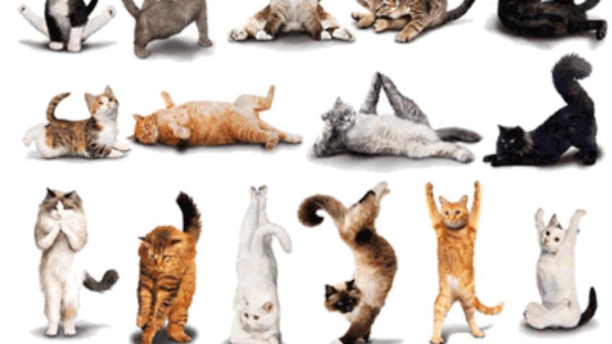 Pilates e i gatti